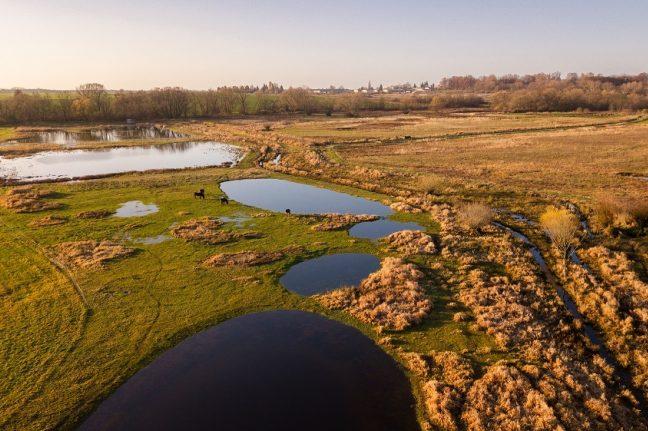 Ptačí park Josefovské louky se rozroste