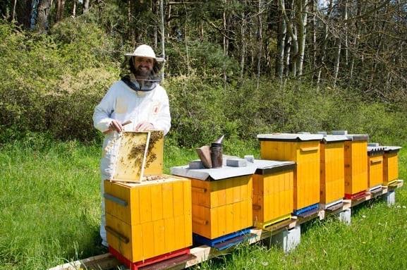 Kraj na pomoc včelařům. Finačně podpoří likvidaci parazita